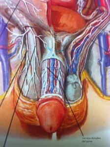 tratamiento_quirurgico